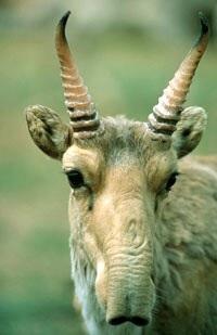 絶滅危惧種、大量死の原因が明らかに